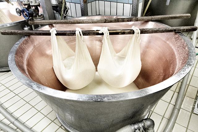 VenditaParmigiano.it - Le due masse caseose così ottenute diventeranno due forme distinte di formaggio